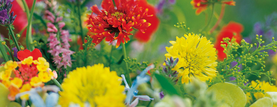 Beautiful yellow and red flowers